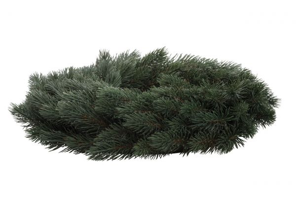Tannenkranz, Adventskranz grün